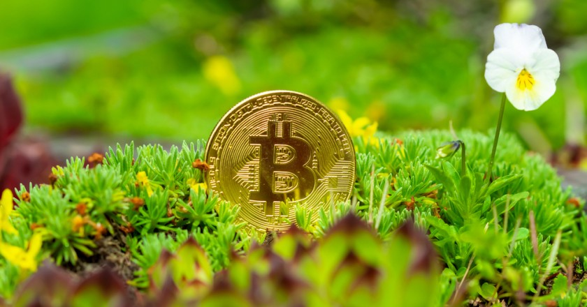 Bitcoingreen